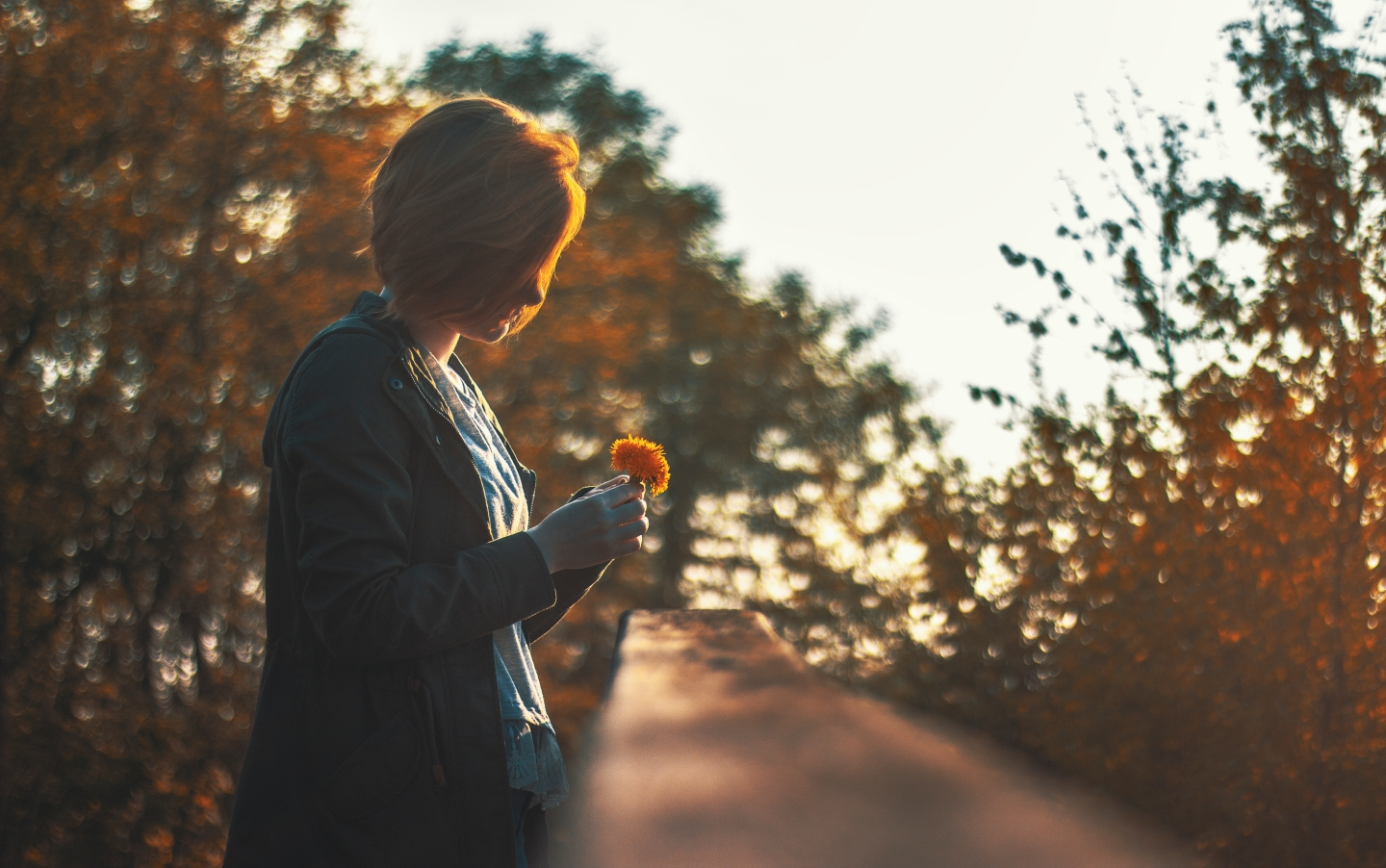 https://www.pexels.com/photo/autumn-beautiful-blur-blurry-403638/