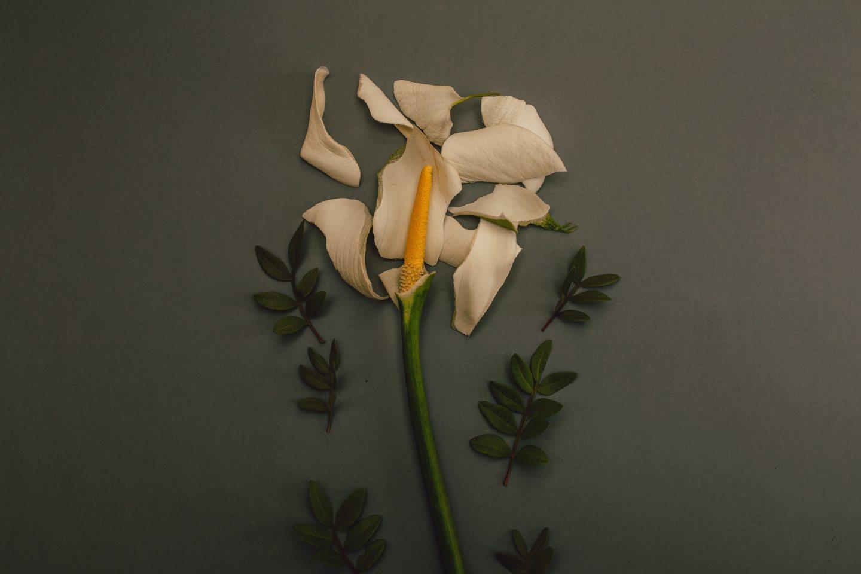 https://www.pexels.com/photo/white-flower-on-grey-background-922926/